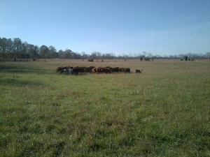 1m Lbs per acre 11-2-12